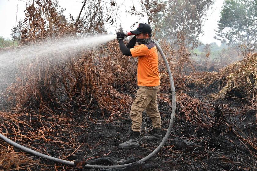 W Indonezji szaleją pożary lasów