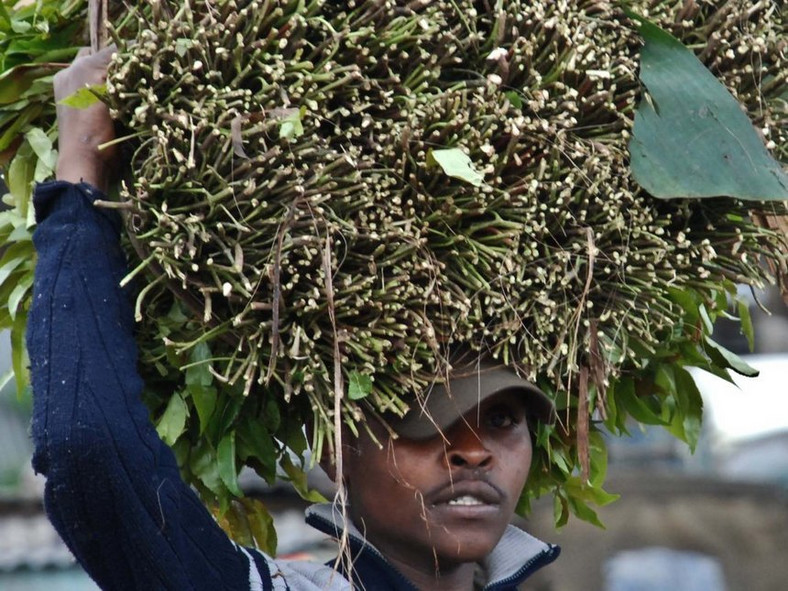 A miraa trade in Maua, Kenya