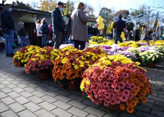 Ratunek dla przedsiębiorców handlujących przy cmentarzach. ARiMR i KOWR uruchomią skup kwiatów