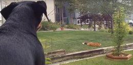 Pies nie przestawał szczekać. Powód był wyjątkowy