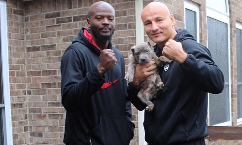 Polski bokser ma nowego psa