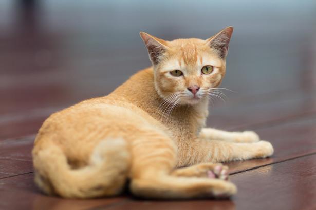 Spółdzielnie lub wspólnoty mieszkaniowe często, aby uniknąć obecności kotów w zimę w piwnicach lub innych pomieszczeniach, zamykają okienka lub inne przejścia, co uniemożliwia schronienie kotom podczas mroźnych zimowych dni. Takie postępowanie może być już traktowane jako znęcanie się nad zwierzętami, bowiem w sposób świadomy dopuszcza się do zadawania bólu i cierpienia poprzez ograniczenie kotom dostępu do ciepłych pomieszczeń.