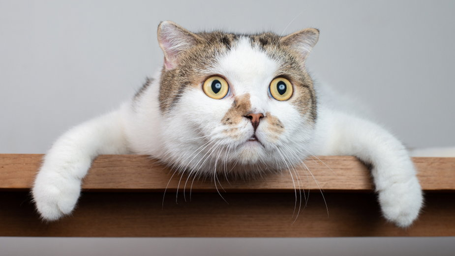 Dlaczego kot jest zazdrosny?
