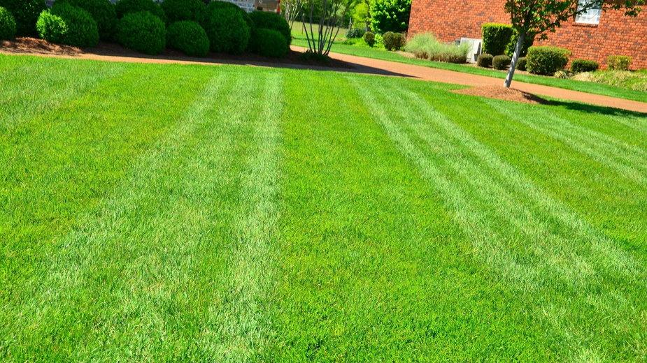 Trawnik należy przygotować do jesiennych chłodów - Clayton800/pixabay.com