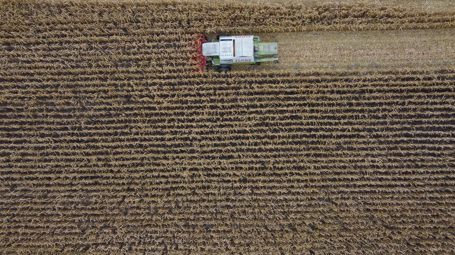 Kombajn na polu kukurydzy
