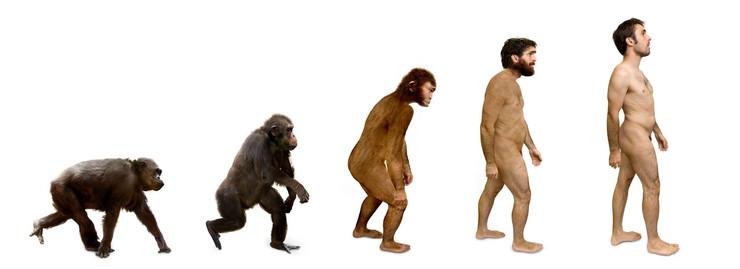 evolucija profimedia-0034860599
