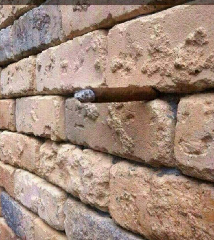 cigla u zidu