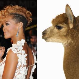 Gwiazdy, które zeszły na psy - zobacz, kto ma swojego sobowtóra w świecie zwierząt