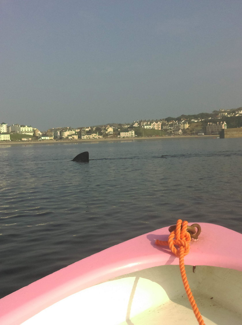 OPEN MOUTHED SHARK NEAR KAYAKERS / OPEN MOUTHED SHARK NEAR KAYAKERS /1519100