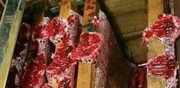 Oto krwawy miód. Zobacz zdjęcia