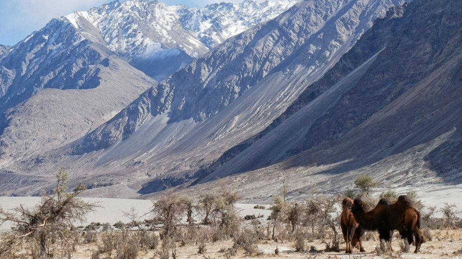 Dolina Nubry