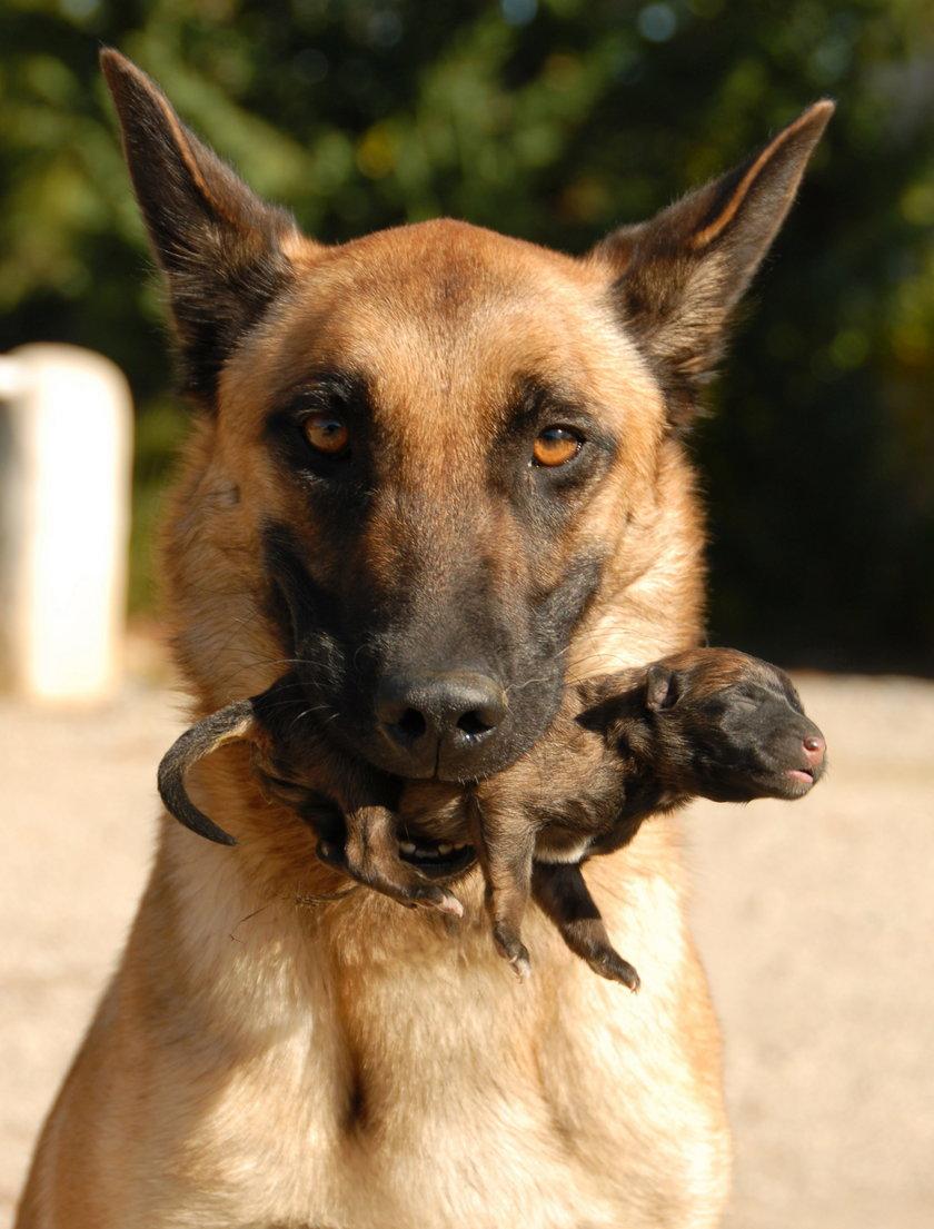 Ranking najpopularniejszych psich imion