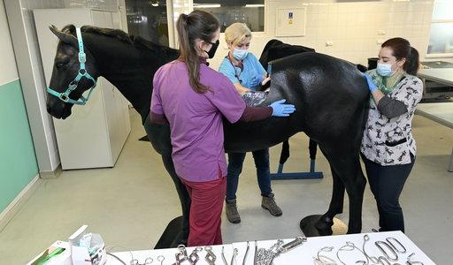Widzicie to zdjęcie? To nie jest fotomontaż! Ten koń rzeczywiście nie ma grzbietu, bo...