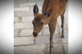 YT_bambi_urla_vesti_blic_safe