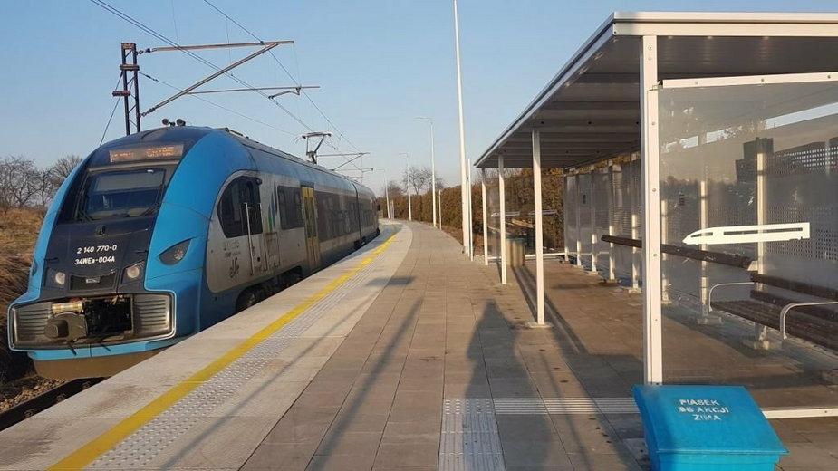 1234 drzewa mają zostać wycięte przy rewitalizacji linii kolejowej z Goleszowa do Cieszyna