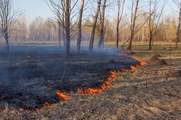 Wypalanie nieużytków grozi grzywną, naganą, a nawet karą więzienia w przypadku wywołania pożaru