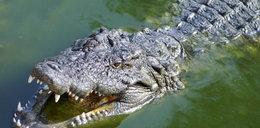 Tragedia na wakacjach. Znany reporter zagryziony przez krokodyla