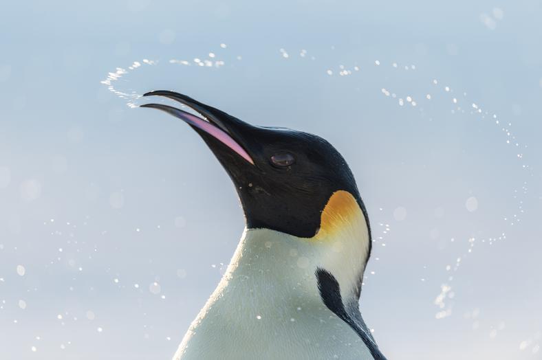 """""""Marsz pingwinów 2: Przygoda na krańcu świata"""": kadr z filmu"""