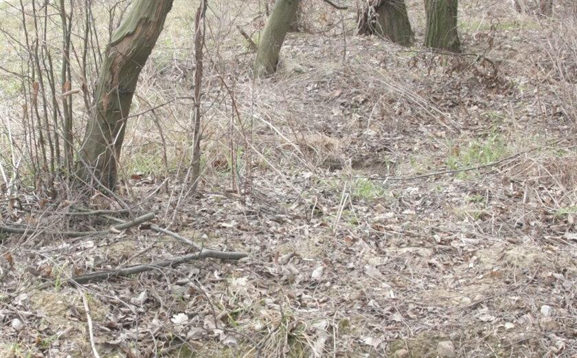To on znalazł w lesie odcięte dłonie!