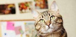 Ten kot ma zadziwiającą umiejętność. Potrafi przewidzieć śmierć