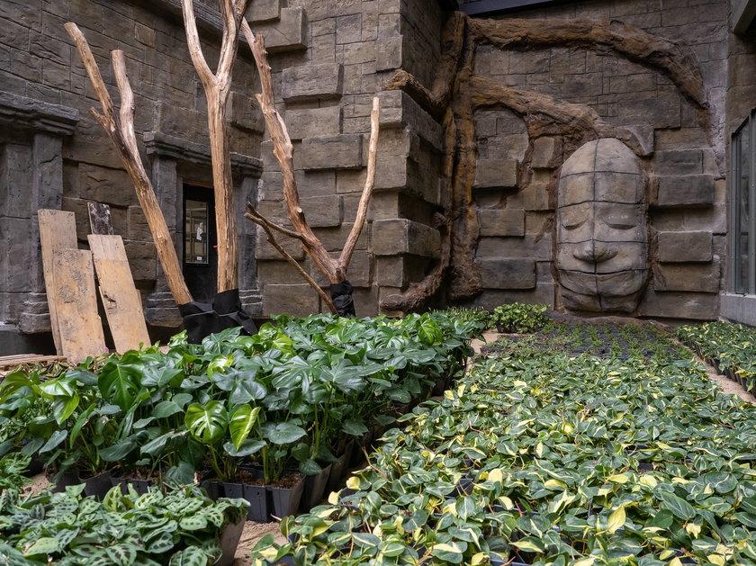 W Orientarium w Łodzi robi się zielono