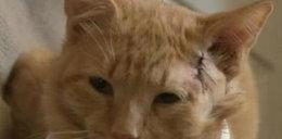 Bohaterski kot. Przed kulą zasłonił ciałem 3-latka