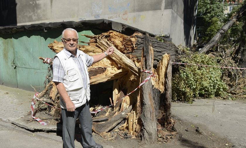 Drzewo zawaliło się we Wrocławiu