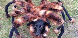 Pies Wardęgi pójdzie do piekła, bo straszył ludzi