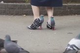 cipele golubovi prtscn youtube