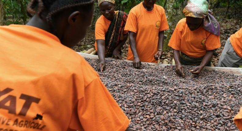Farmers Day: Ghana, Ivory Coast secures $113 million from global commodities trader, Cargill to expand cocoa processing facilities