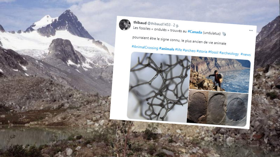 Niezwykłe odkrycie naukowców sprzed 890 mln lat