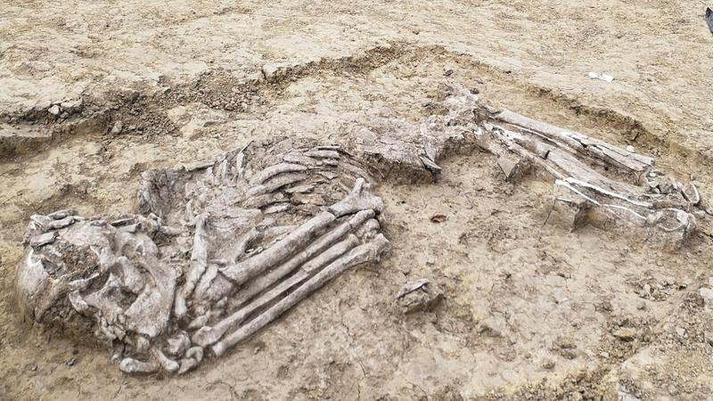 mi az ősi leletek legmegfelelőbb módszere