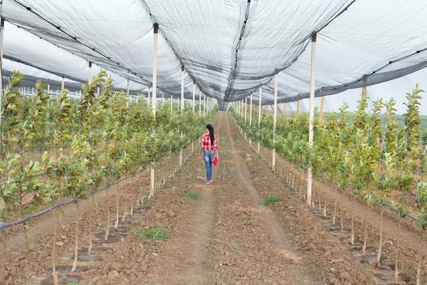 Rolnik zatrudniający cudzoziemców do sezonowej pracy przy zbiorach w ramach takiego porozumienia ma obowiązki podatkowe względem pracownika i urzędu skarbowego.