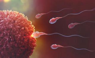 Portugalia legalizuje zapłodnienie nasieniem nieżyjących mężczyzn