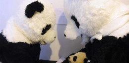 To ja, twoja mama panda. Naprawdę?