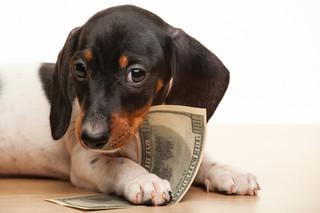 Podatek od posiadania psa 2022. Znowu zapłacimy więcej