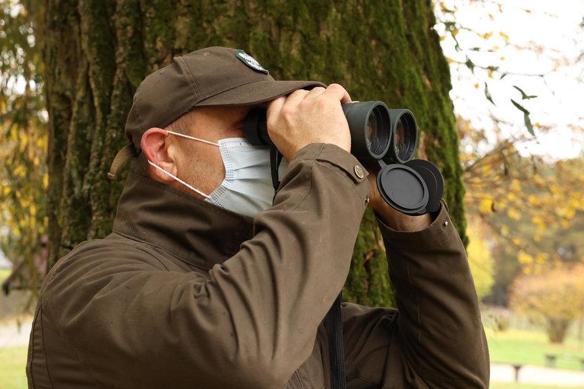 Leśnicy patrolują okolicę w poszukiwaniu zwierząt