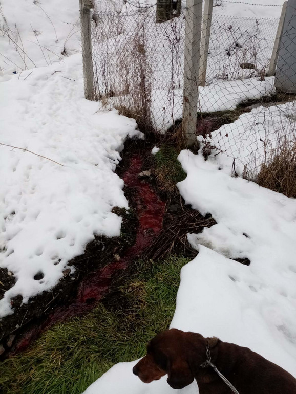 Sablasan prizor: Klanični otpad se razlio naseljem i proneo neprijatne mirise