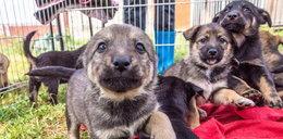 Słodkie psiaki czekają na nowy dom