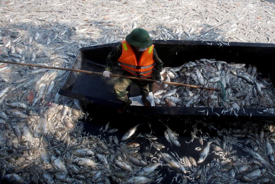 Wietnam: setki kilogramów zdechłych ryb z powodu zanieczyszczeń