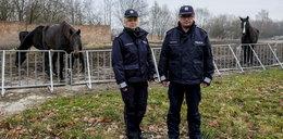Zlikwidują posterunek policji konnej w Chorzowie?