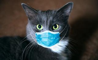W Rosji zarejestrowano pierwszą szczepionkę przeciw Covid-19 dla zwierząt