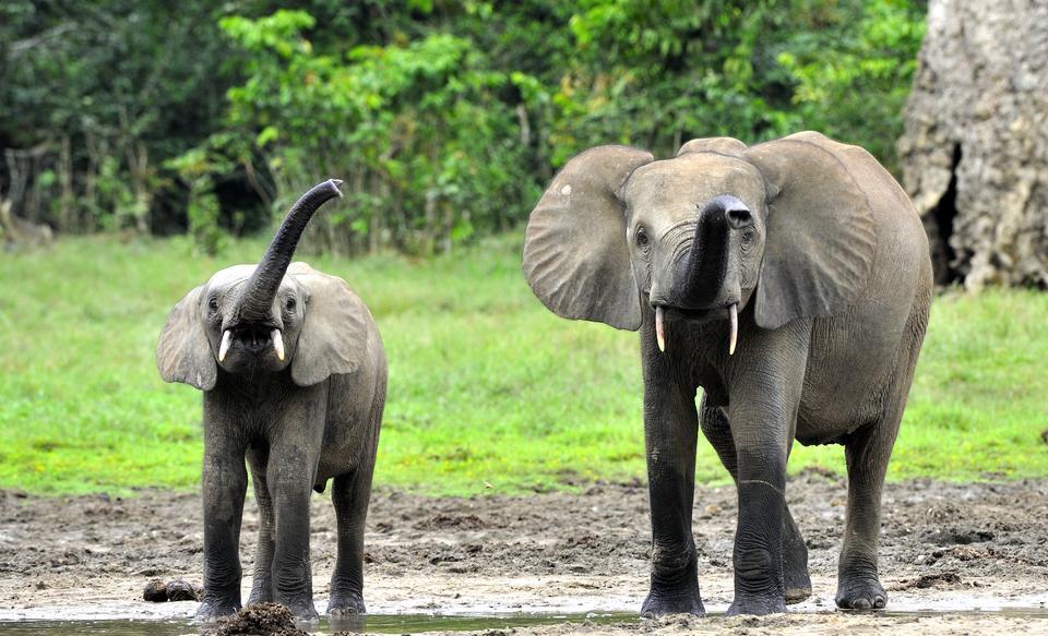Kotlina Konga, Afryka