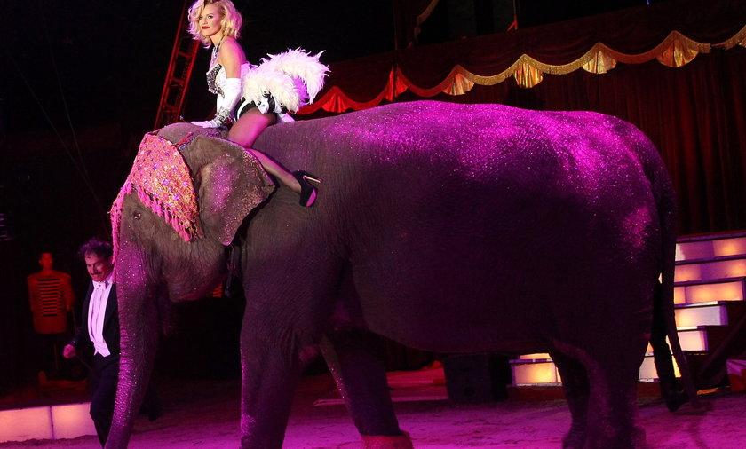 Doda na słoniu w cyrku