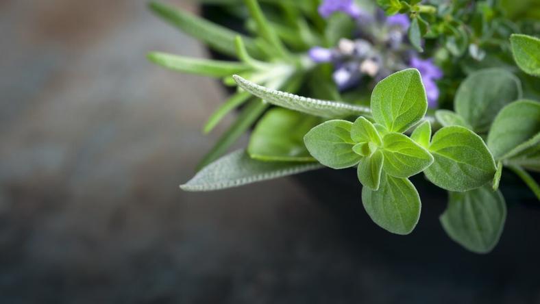 Dziurawiec, rumianek, pokrzywa, lipa to zioła niezastąpione w lecznictwie