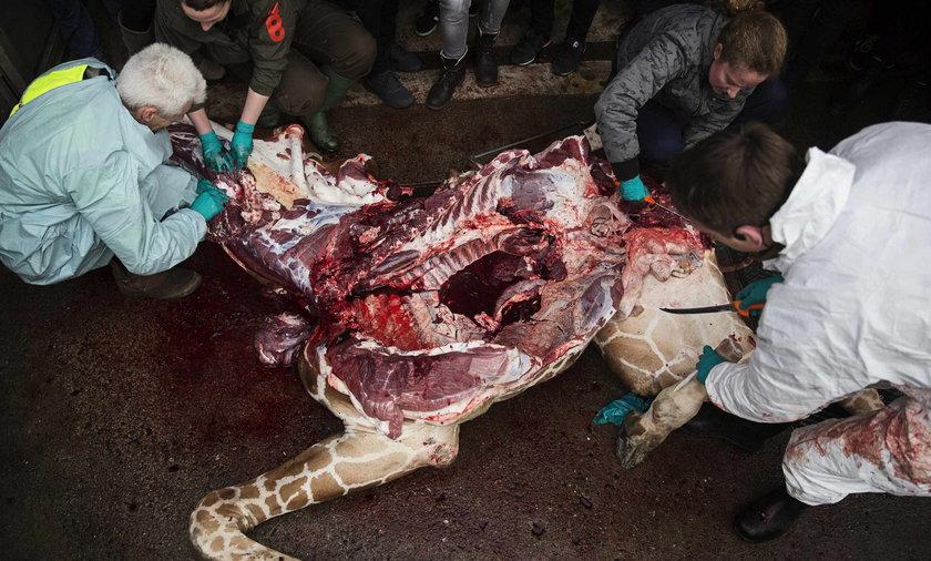 Zabili żyrafę na oczach dziec