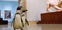 Wpuścili pingwiny do muzeum. Zobacz, co się stało!