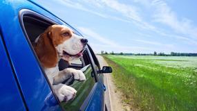 Przydatne gadżety na aktywny wypoczynek z psem