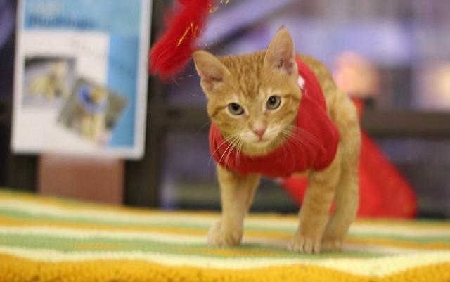 Mali mačak posle operacije
