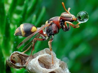 BUBBLE WASPS / BUBBLE WASPS /1398646